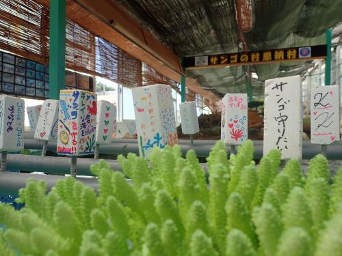 【沖縄】みんなの想いをサンゴにのせて。少しでもサンゴの抱えている問題を解決できるように…。