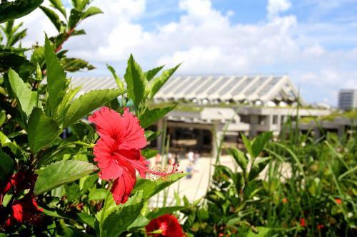 沖縄でのんびり旅(イメージ)