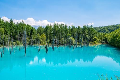 【富良野】青い池(イメージ)