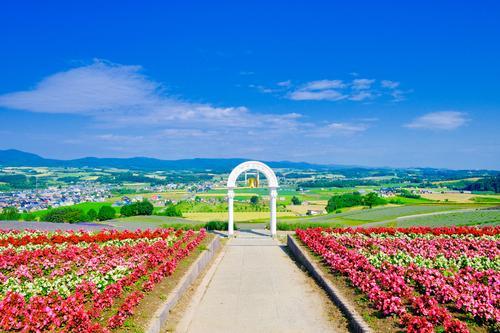 【富良野】日の出公園(イメージ)