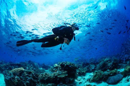 ダイビングで出会える!青い海と魚で非日常を味わう(イメージ)