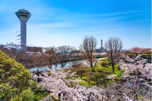 【函館】春は桜が函館の街を包み込む(イメージ)