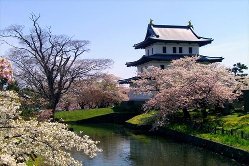 【函館】お堀越しの松前の桜